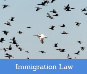 Immigration Law Solicitors Near Me UK